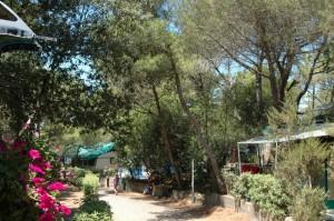 campi estivi 2015 camping donoratico